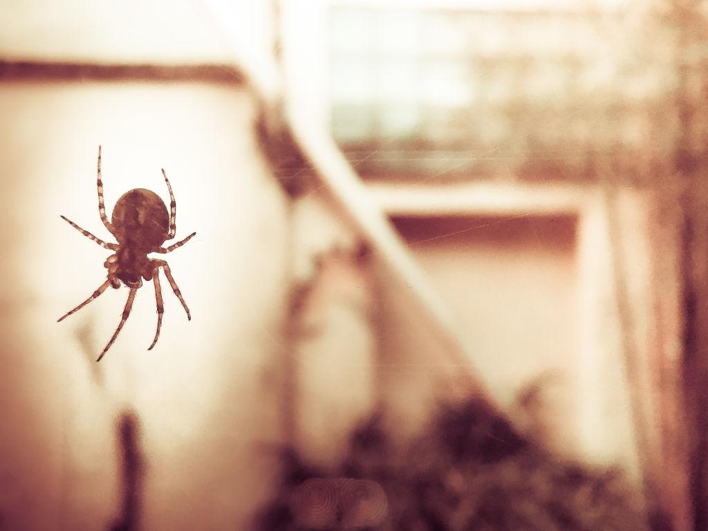 Nettoyage toile d'araignée